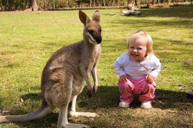 Relation between Kangaroos and humans