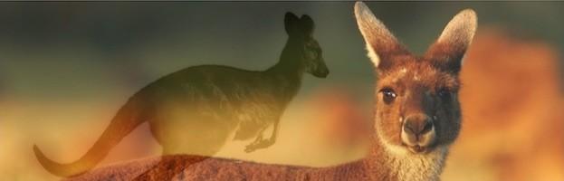 Kangaroo Species