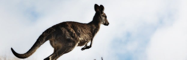 Kangaroo Adaptations